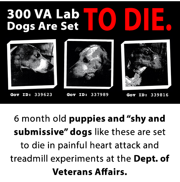 300 VA lab dogs are set to die.